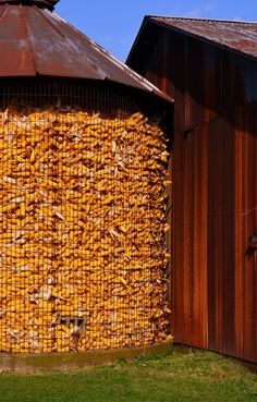 Country Living ~ Dried Corn on cobs in a corn bin hardly see bins this anymore ~~~~~