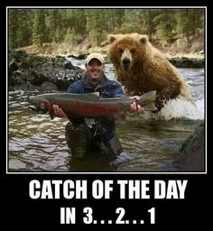 Look at My Big Fish! Why Are You Running Away? Bear Hunting Photobomb: This guy is in for a big surprise and will probably shit in his pants in 3 2 Animals And Pets, Funny Animals, Cute Animals, Funniest Animals, Animal Fun, Wild Animals, Tierischer Humor, Meanwhile In Canada, Funny Bears