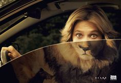 Zoo Safari: Lion