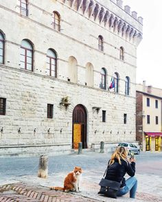 """Do you know the name of this cat?  His name is """"Principe"""" (Prince) and he is very famous in all the city of Montepulciano! People told me that he goes inside the church  when it's hot outside  . . . #love #cat #cats #animal . . ."""
