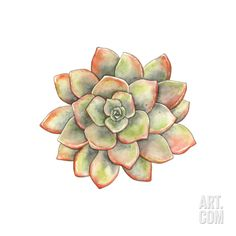"""Watercolor Succulent, Vector Illustration in Vintage Style. Art Print by Nikiparonak at <a href=""""http://Art.com"""" rel=""""nofollow"""" target=""""_blank"""">Art.com</a>"""