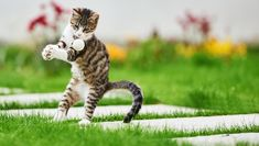 """These cat stars of YouTube dominate in their sports. In fact, they'd probably take home the gold in the Olympics if we could just do something about that """"humans only"""" rule. Gutter Protection, Youtube Cats, Beautiful Kittens, Many Men, All About Cats, Cat Quotes, Summer Olympics, Cool Cats, Fur Babies"""