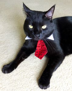 Pet Dog Cat Collar ACCESSORY Necktie by fingerstory on Etsy, $10.00