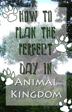 There is so much to do in Animal Kingdom and we have the resources to help you plan your perfect day at the park! Disney World Tips And Tricks, Disney Tips, Disney Magic, Disney Parks, Downtown Disney, Disney Vacation Club, Disney Cruise Line, Disney Vacations, Family Vacations