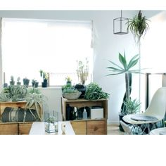 Atsushiさんの、林檎木箱,NO GREEN NO LIFE,植物,のお部屋写真
