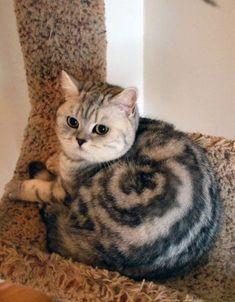 不思議な模様に思わずビックリ! 珍しい柄を持つ猫さん達 14選 | エウレカ!eureka! - もふもふ犬猫動画