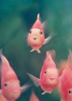 pretty in pink...Just look at these little guys! They're tooo cute..wonder where they are all goin??
