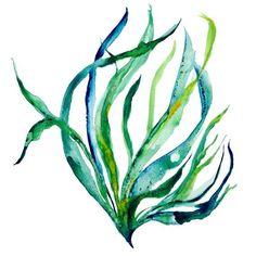 Sway - seaweed illustration, sea life, ocean botanical, vegetation, nori, watercolor illustration, watercolor seaweed, ocean inspired art