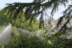 Jardines del Campo del Moro. Palacio Real.