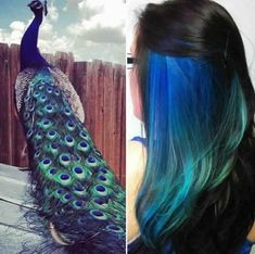 peacock hair color-not my color, but cool idea. Maybe once my hair grows out again Peacock Hair Color, Peacock Colors, Peacock Blue, Teal, Peacock Theme, Bold Colors, Magenta, Turquoise, Hidden Hair Color