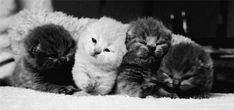 Cuteness Overload!