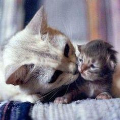 Beautiful Kitten - 2nd November 2012