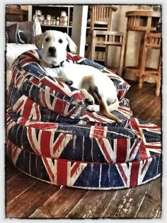 Union Jack  dog pillows. This lab looks like a King!!