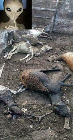 BRAZIL - Animals have mysterious death in a rural area of Feira de Santana -Bahia (Aliens?)