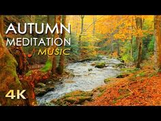 UHD Beautiful Nature Video & Relaxing MUSIC - Forest River Sounds