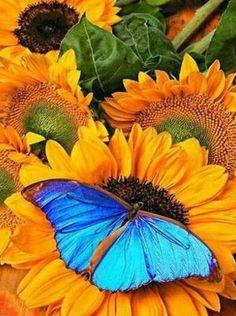 Diy diamond painting cross stitch kit sunflower crystal round diamond sets home decorative Diamond embroidery flowers butterfly Butterfly Kisses, Butterfly Flowers, Blue Butterfly, Morpho Butterfly, Beautiful Bugs, Beautiful Butterflies, Beautiful Flowers, Morpho Azul, Blue Morpho