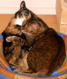 Snuggle Sunday