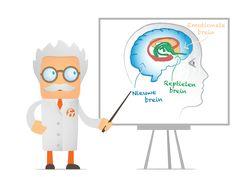 Het brein onder de loep: het brein bestaat uit 3 delen