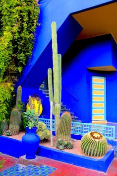 Jardins de Majorelle, Marrakech (2012). Happy place.                                                                                                                                                      More
