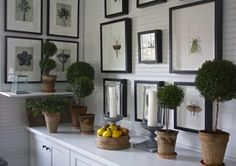 White walls, white cabinets, black framed artwork, topiaries - Carolyne Roehm greenhouse