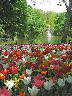 Keukenhof, The Netherlands. Holland's primiere garden.