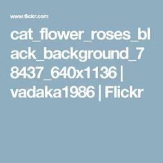 cat_flower_roses_black_background_78437_640x1136 | vadaka1986 | Flickr