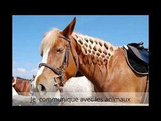 Communication, Horses, World, Google, Youtube, Animals, Animales, Animaux, Animal