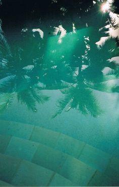 Dreaming of Brazil Summer | Shadowflower
