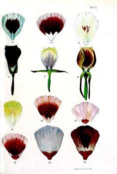 Genetics-Botanical-Inheritance-in-flowers-3.jpg 1,875×2,802 pixels