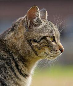 Cats, Animals, Cooking, Gatos, Animales, Animaux, Animal, Cat, Animais