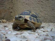 Calmas e de vida longa, tartarugas são opção prática de pet
