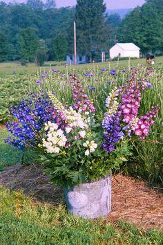 delphiniums - Google Search Colorful Flowers, Purple Flowers, Beautiful Flowers, Cut Flowers, Delphinium Flowers, Flower Farmer, Flower Seeds, Summer Garden, Dream Garden