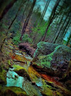 Mossy... Glossy. - (Photo © Withoutink)