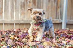 Fall, Dog photography