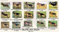 GSD Galerie Der Sieger 1967 - 1988
