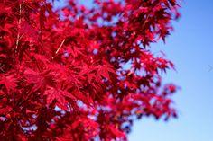 44 paysages colorés qui mettent en évidence la beauté naturelle incroyable de la Terre