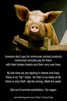 please opt out of animal exploitation and go #vegan