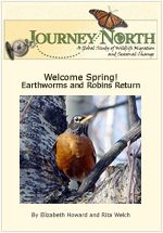 Slideshow: Welcome Spring! The Earthworms and Robins Return