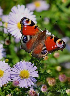 Little Purple Flowers & Butterfly