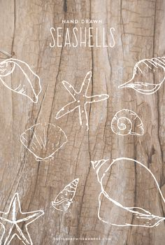 Hand Drawn Seashells - Designs By Miss Mandee. These simple sketches are perfect for beachy designs! Great photo overlays, embellishments, and logos.