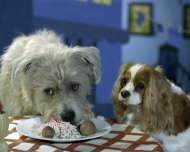 Dogs reenact Lady & the Tramp