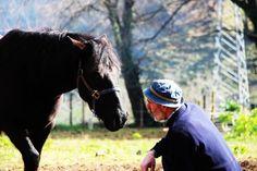 Mi tío Norio con sus caballos de la raza Asturcón, compartimos espacio, es una pasada verlo con los caballos, la conexión que hay entre ellos.