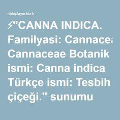 """⚡""""CANNA INDICA. Familyasi: Cannaceae Botanik ismi: Canna indica Türkçe ismi: Tesbih çiçeği."""" sunumu"""
