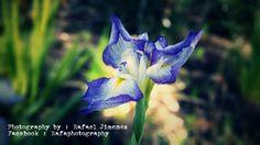 #photography #flower #still #macro #flowers #purple