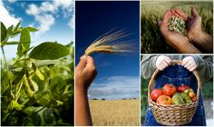 GMO's & what you need to know