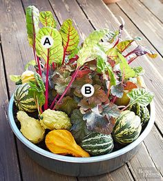 Add beauty to your fall garden or landscape with these gorgeous container gardening ideas. We have different fall container plants to try, fun container planting ideas, and stunning flower color schemes.