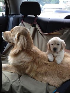 """Extremely cute car ride. From your friends at phoenix dog in home dog training""""k9katelynn"""" see more about Scottsdale dog training at k9katelynn.com! Pinterest with over 19,900 followers! Google plus with over 133,000 views! You tube with over 400 videos and 50,000 views!! Serving the valley for 11 plus years"""