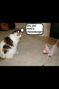 Too funny cats