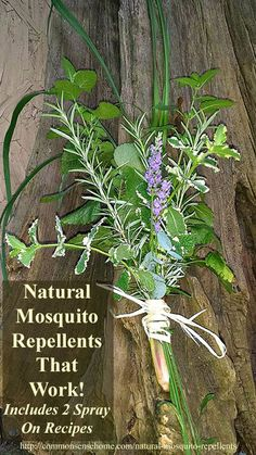 Natural Mosquito Repellents That Work: 5 ways to use herbs and flowers for mosquito control plus two herbal insect repellent recipes.