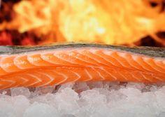 salmão perfeito A indústria do Salmão e os danos à saúde e meio ambiente